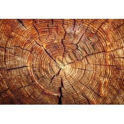 Фотофон Спил дерева